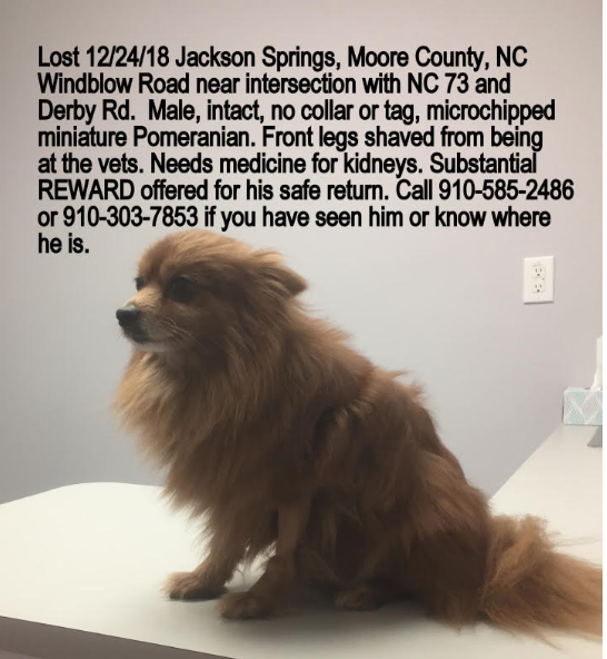 Lost Dog Pomeranian