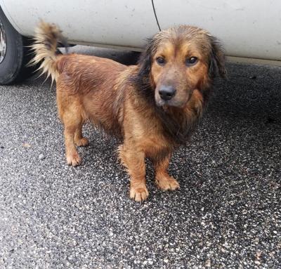 Found Dog Pinehurst