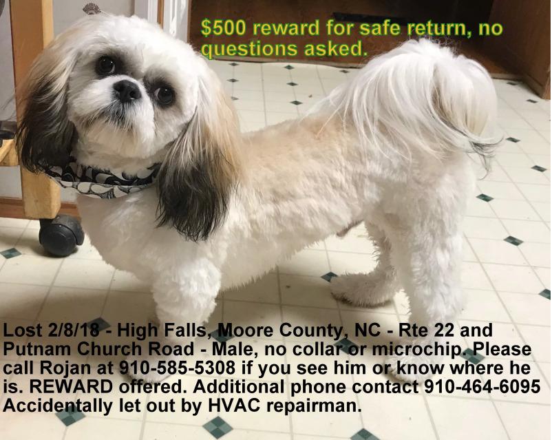 Lost Dog White And Brown Shih Tzu In Highfalls 500 Reward