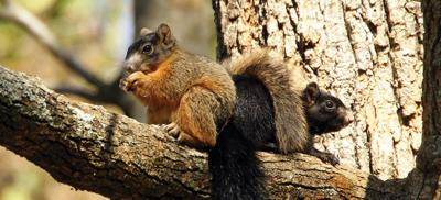 ps_squirrel_0920-1024x465.jpg
