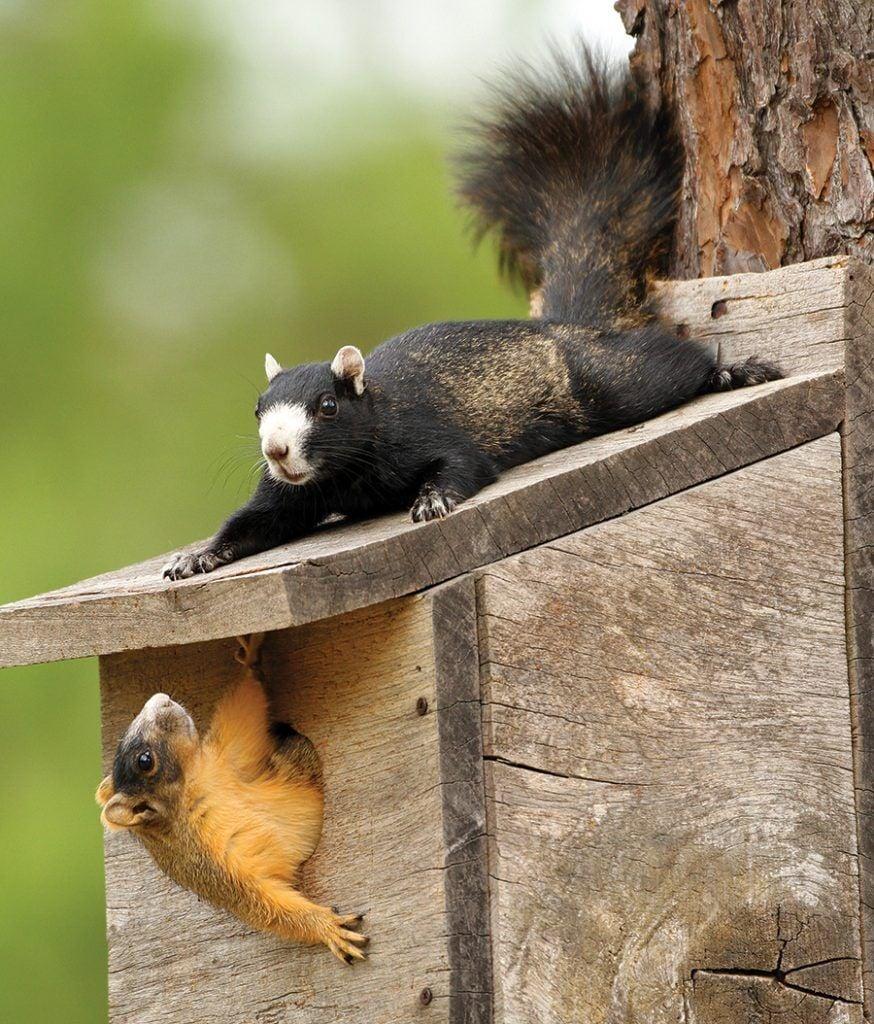 ps_squirrel2_0920-874x1024.jpg