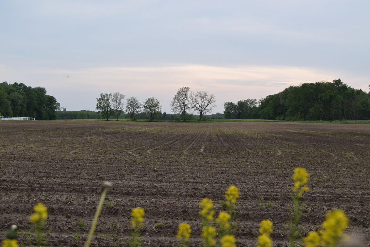 Soggy farm field