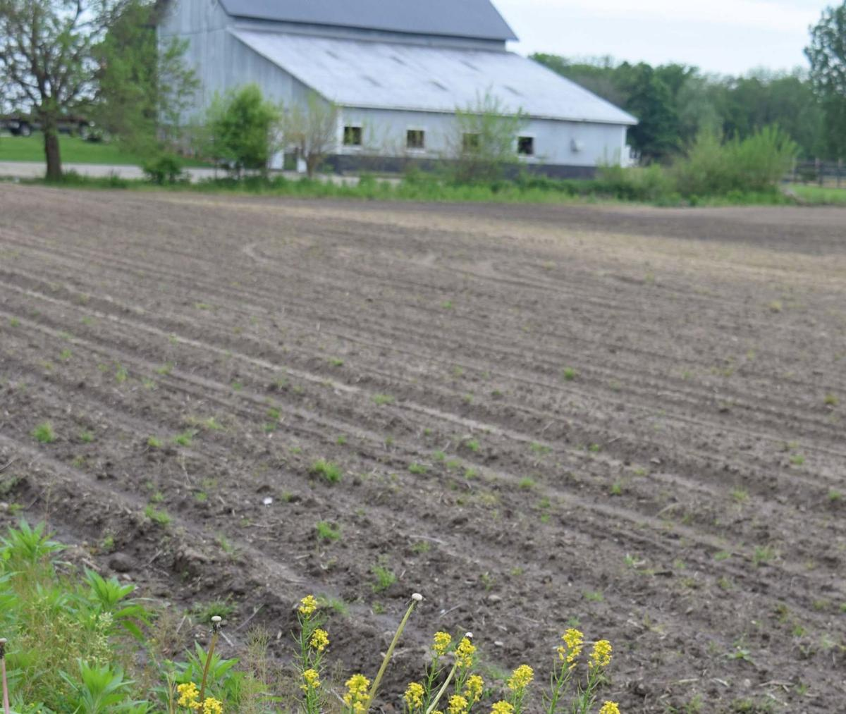 Soggy farm field 2