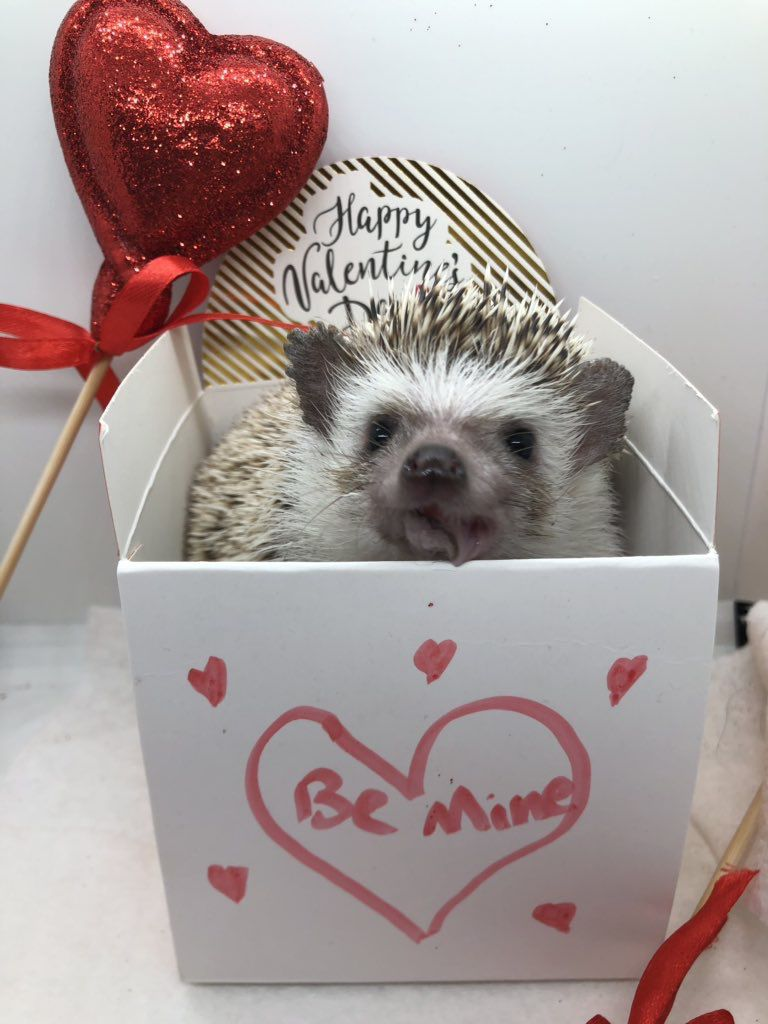 SFA students dress up their pets for Valentine's Day