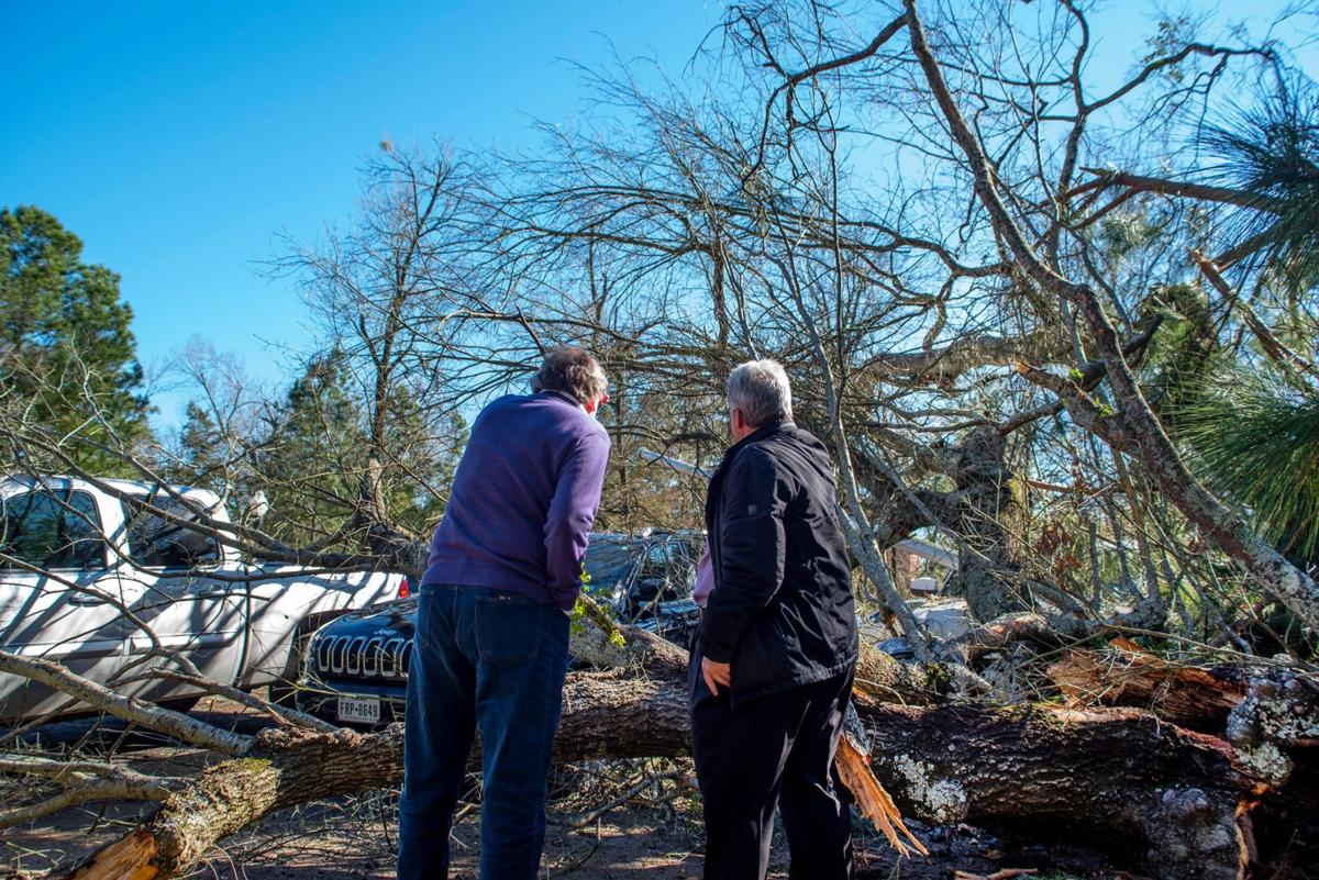 Tree falls on vehicles, no reported injuries