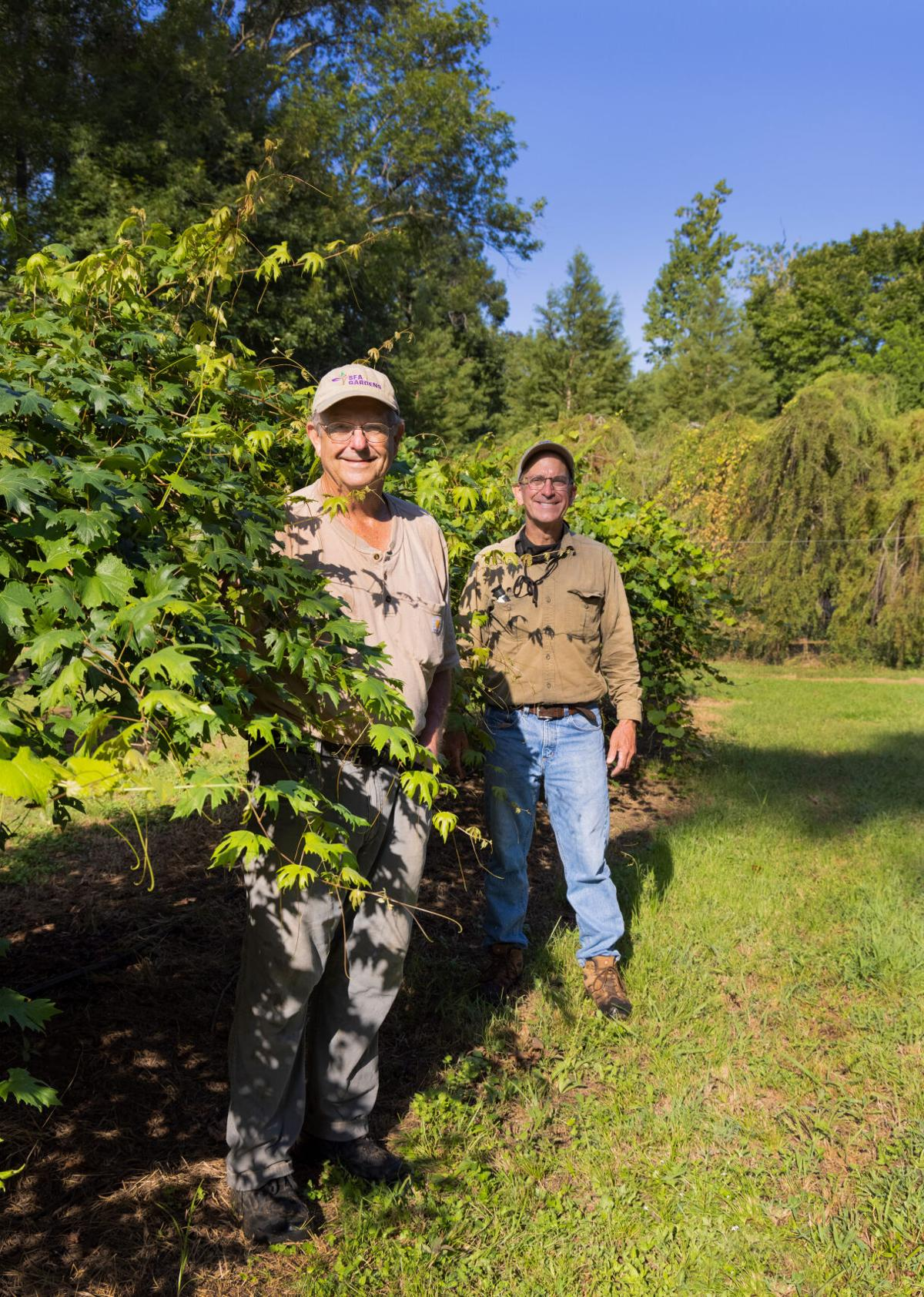 'Pick Your Own'  at SFA Gardens to celebrate muscadine grape harvest