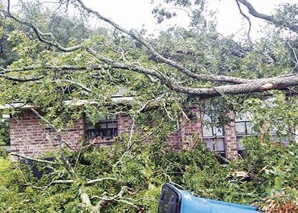 Tree Over House