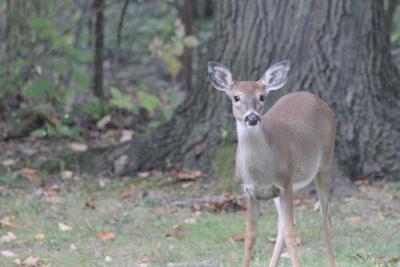 Bow hunting season totals