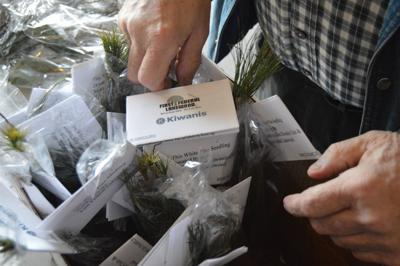 Kiwanis Arbor Day project