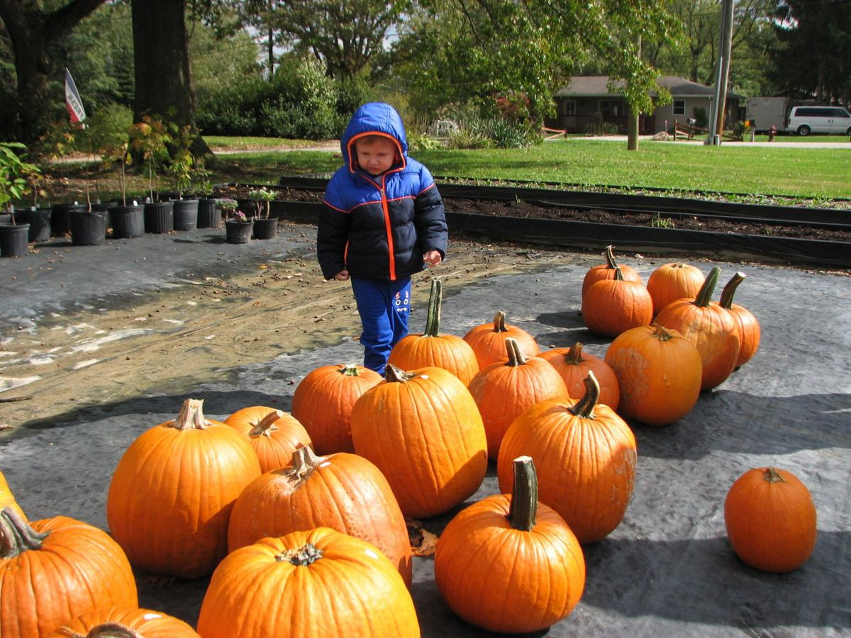 Each Year The Medina County Fall Foliage Tour Put On By Park District Highlights 10 15 Places Of Interest That Can Include Farms