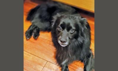 Adopt a pet: Meet Gunner