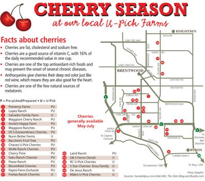 Brentwood Fruit Picking Calendar 2020 Brentwood cherries are ready for the picking | Living | thepress.net