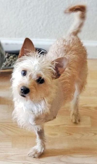 Adopt a pet: Meet Cheerio