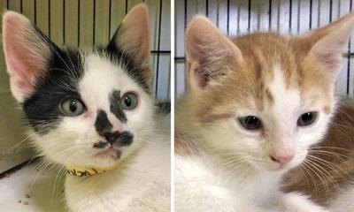 Adopt a pet: Meet Rusty and Tucker