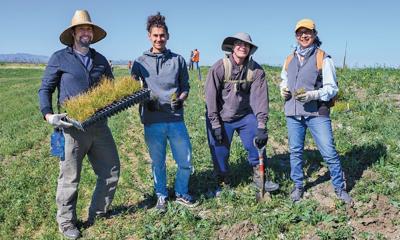 Volunteers help plant in Dutch Slough