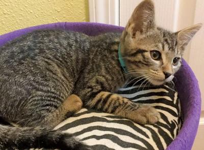 Adopt a pet: Meet Jake