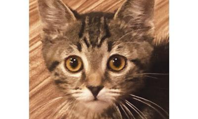 Adopt a pet: Meet Wittles