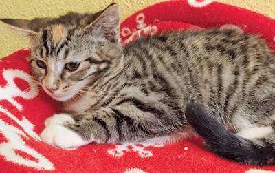 Adopt a pet: Meet Tabitha