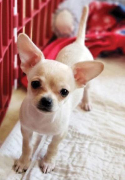 Adopt a pet: Meet Dolly