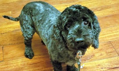 Adopt a pet: Meet Oliver