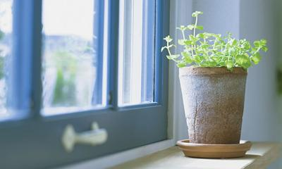 The many benefits of houseplants