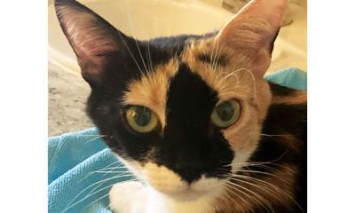 Adopt a pet: Meet Pretty Lyla