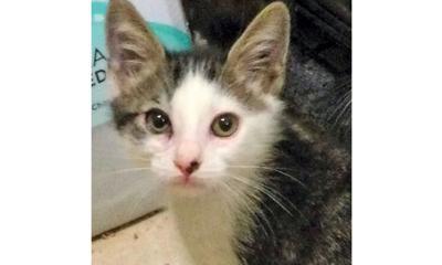 Adopt a pet: Meet Louie