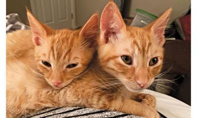 Adopt a pet: Meet Cheddar and Cheetah