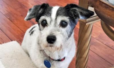 Adopt a pet: Meet Oreo