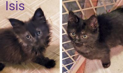 Adopt a pet: Meet Isis and Kismet