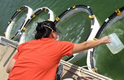 Aly Lie ( Aquatic Ecotechnologies)