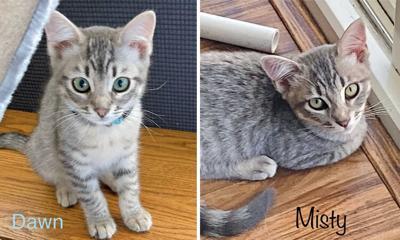 Adopt a pet: Meet Dawn and Misty