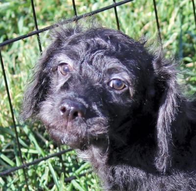 Adopt a pet: Meet Bandit