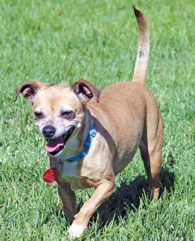 Adopt a pet: Meet Sarah