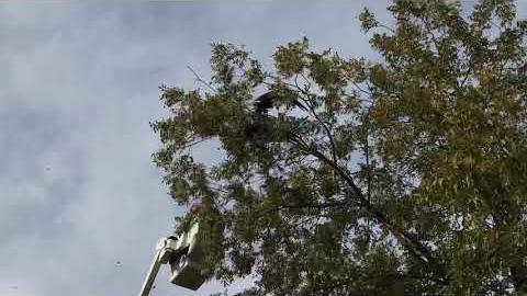 [Video] Eagles tumble into Brentwood