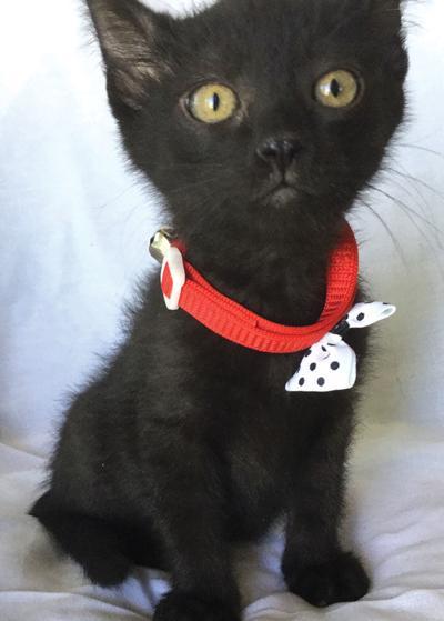 Adopt a pet: Meet Peter Pan