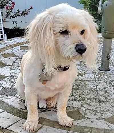 Adopt a pet: Meet Willis