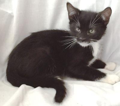 Adopt a pet: Meet Butch