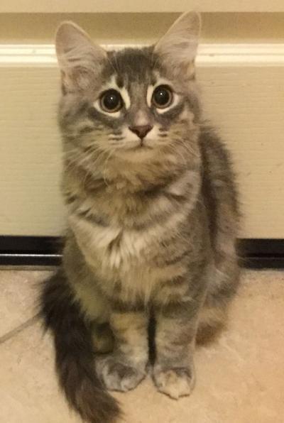 Adopt a pet: Meet Porche