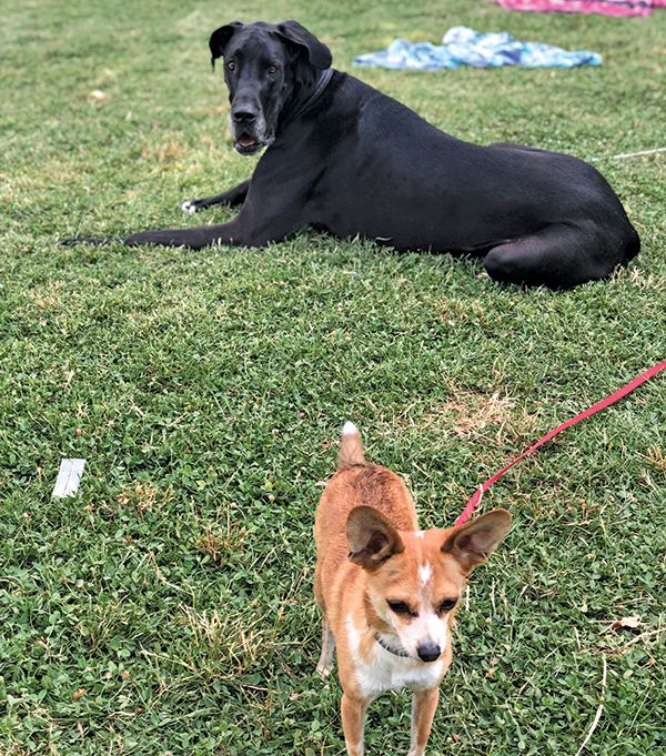 Clyde and Dane, October 18,2019