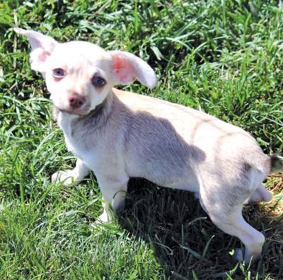 Adopt a pet: Meet Lil Bit