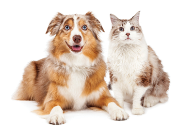 What's in a pet's name? | Living | thepress net