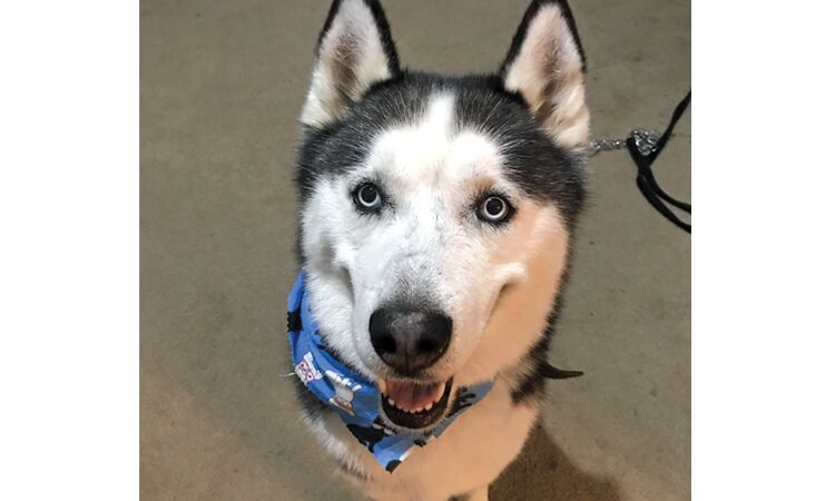 [Photos] November 2020 Pets