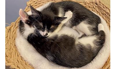 Adopt a pet: Meet Charlie and Barnaby