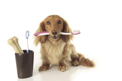 Oral hygiene for pets
