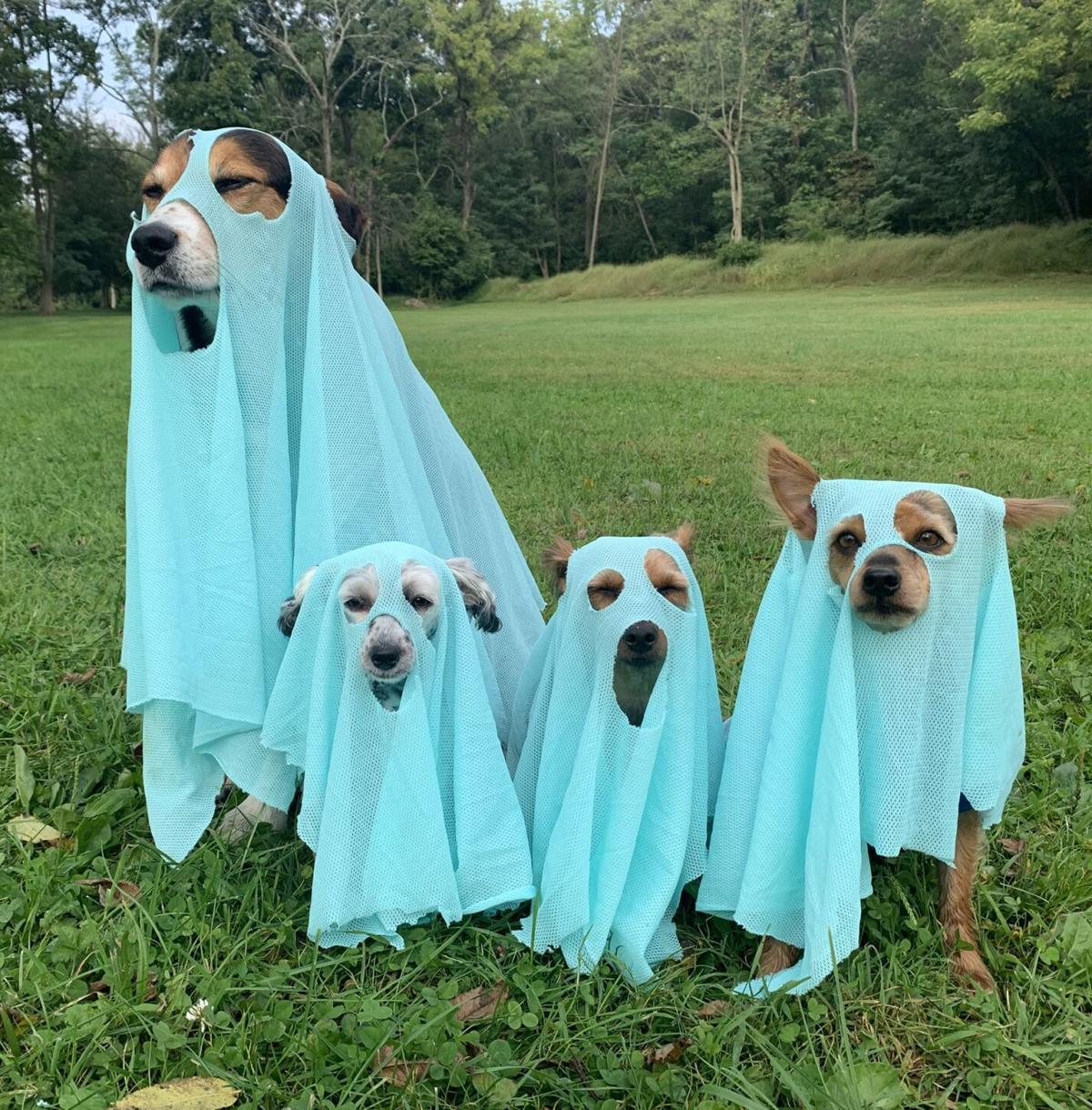 HALLOWEEN DOGS_MARGIE MAY.jpeg