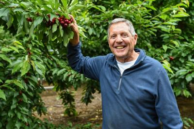 Brentwood Fruit Picking Calendar 2020 Late season rains threaten East County cherry crops | Features