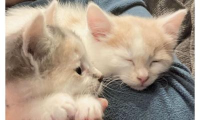 Adopt a pet: Meet Ziti and Penne