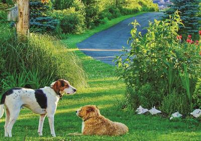Lawns and pets