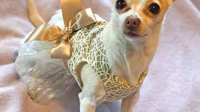 [Photos] December 2018 Pets